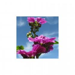 Mauve fleurs Demeter 10 gr sachet